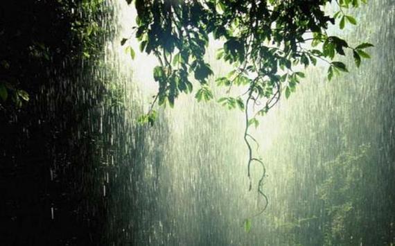 2015-01-31-rain.jpg