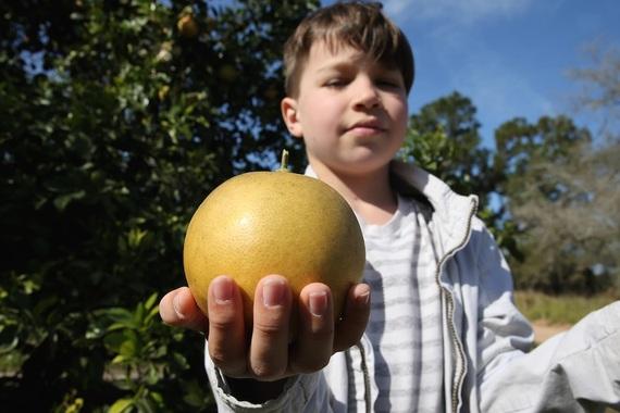 2015-02-01-SOSIdenwithgrapefruit.jpg