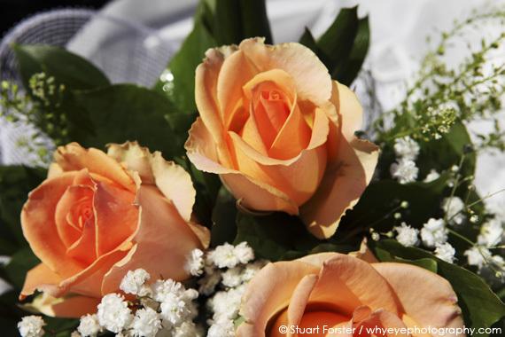 2015-02-03-Rose.jpg