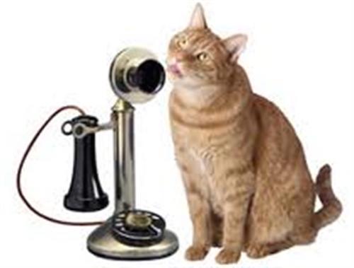 2015-02-05-catonphone14.jpg
