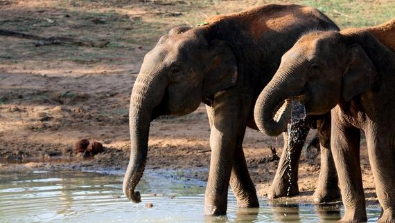 2015-02-08-elephantsdrinking.jpg