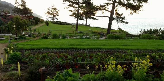 2015-02-08-garden2.JPG