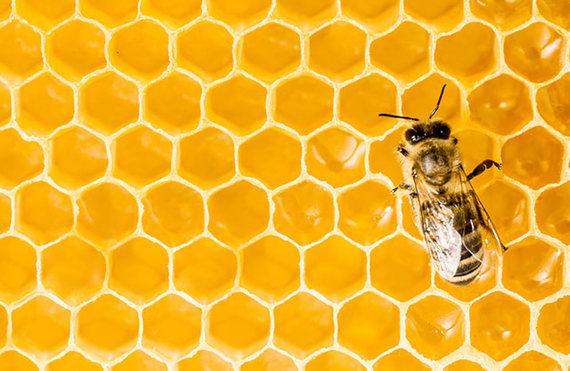 2015-02-09-Bee.jpg