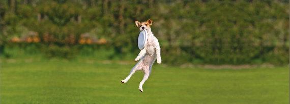 2015-02-09-Dogjumping.jpg