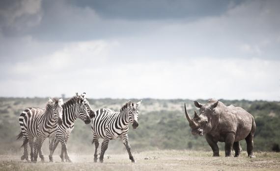 2015-02-09-Kenya6135.jpg