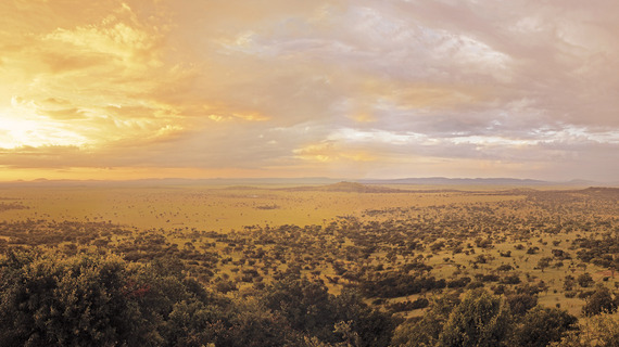 2015-02-09-Serengeti1aCopy.jpg