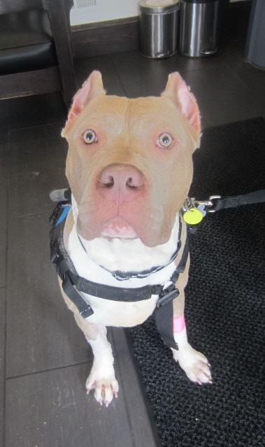 2015-02-09-dogvaccine.jpg