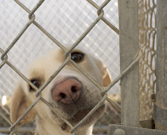 2015-02-10-Dog_in_animal_shelter_in_Washington_Iowa.jpg