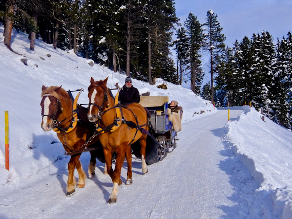 2015-02-11-HorseandSleigh.jpg