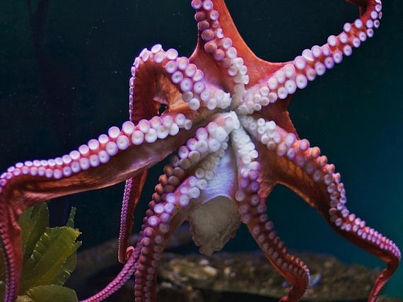 2015-02-12-octopusdate.jpg