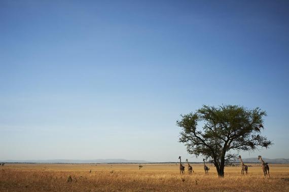 2015-02-16-Serengeti.jpg