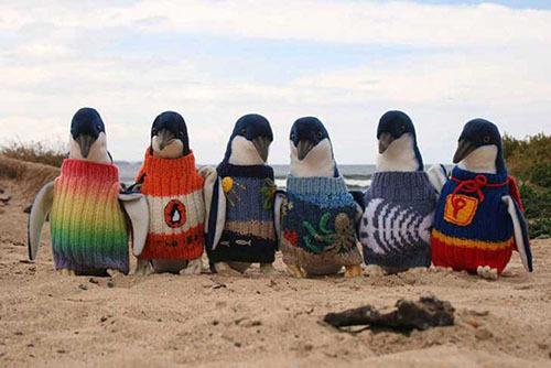 2015-02-18-pinguinos.jpg