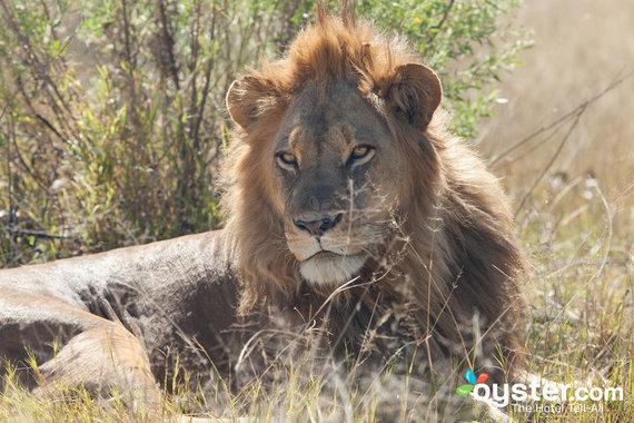 2015-02-19-safari.jpg