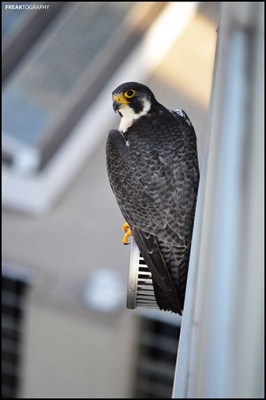 2015-02-20-rooftoppingbird.jpg