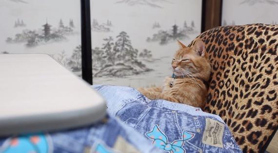 kotatsuCAT01