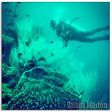 2015-02-23-ocean_diver.jpg