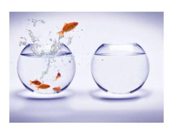 2015-02-24-fish.jpg