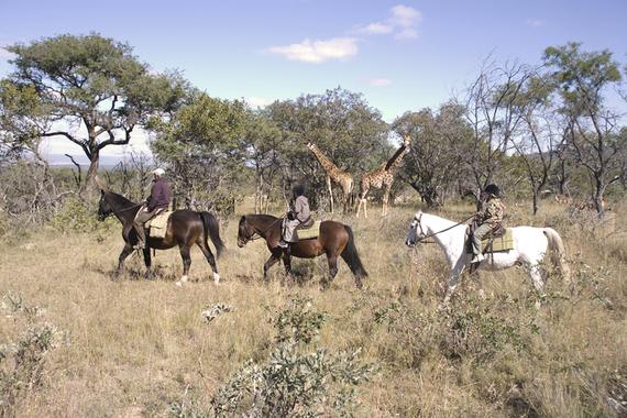 2015-02-25-Horseriding_WilliamGray.jpg