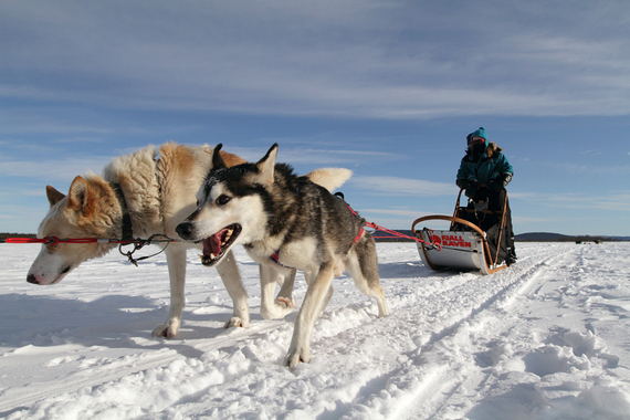 2015-02-25-Mushing_1_WilliamGray.jpg