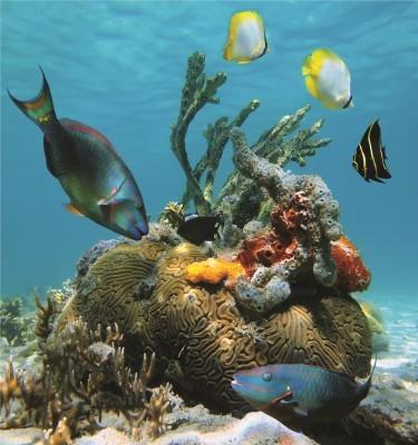 2015-02-25-Reefshutterstock375x400.jpg