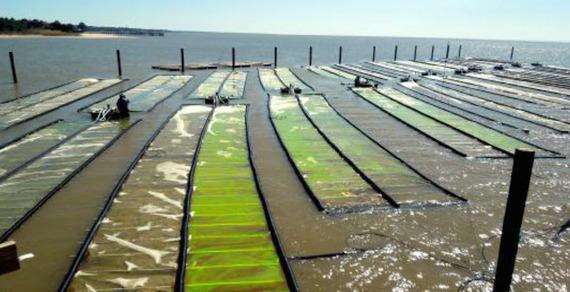 2015-02-26-algae1.jpg