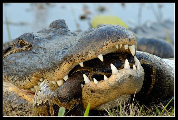 2015-02-27-CrocodileandSnake.jpg
