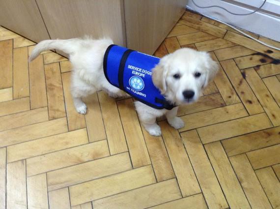 2015-02-27-servicedog2.jpg