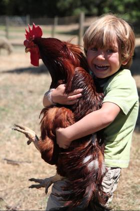 2015-02-28-chicken2.png