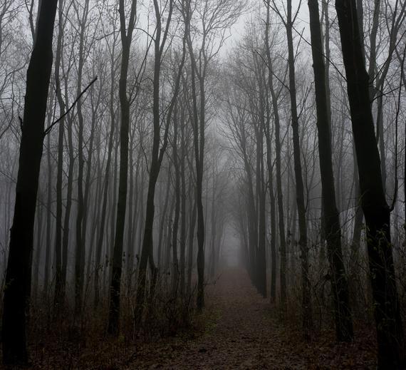 2015-02-28-foggytrees.jpg