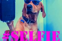 2015-03-02-SelfieTrends.png