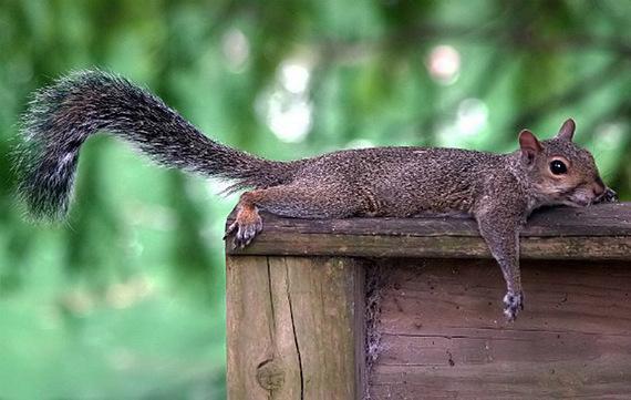 2015-03-02-SquirrelLazyHP.jpg