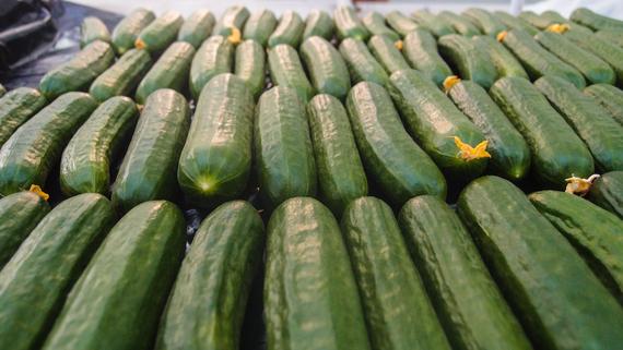 2015-03-04-1425428489-1813545-Sahara_Forest_Cucumbers.jpg