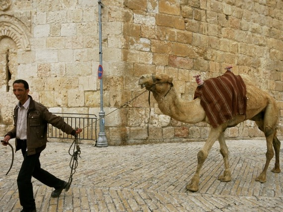 2015-03-04-1425488774-8539553-CamelDriverOldCityJerusalem.jpg