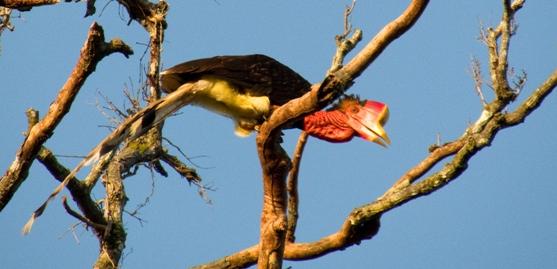 UPSC 2016 Prelim Answerkey Environment Biodiversity
