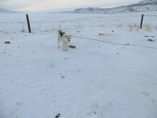 2015-03-07-1425771662-5415352-Greenland106.JPG