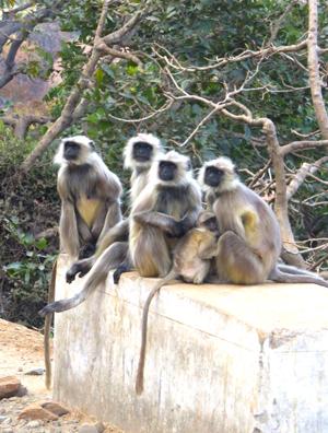 2015-03-08-1425847504-3742747-monkeyshp.jpg