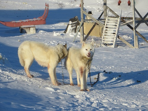 2015-03-11-1426108059-9011315-Greenland369.JPG