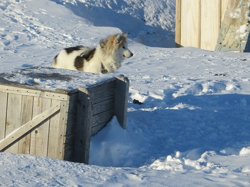 2015-03-12-1426169318-5062218-Greenland430.JPG