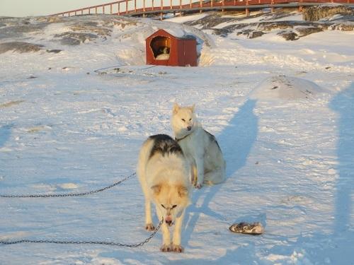 2015-03-12-1426169451-5114655-Greenland334.JPG