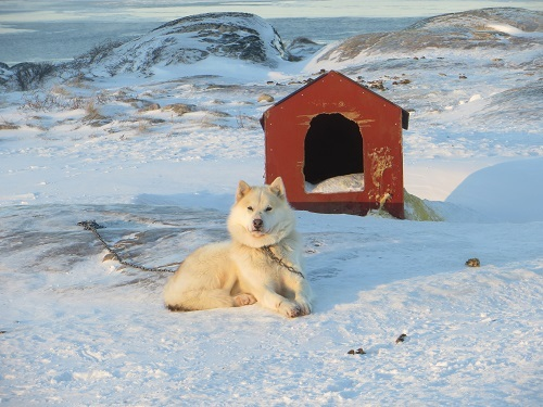 2015-03-12-1426169600-5564418-Greenland335.JPG