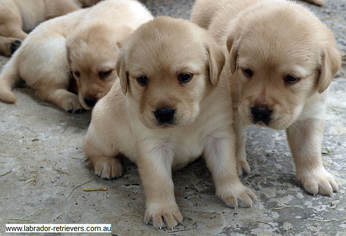 2015-03-18-1426693724-4952933-puppies.jpg