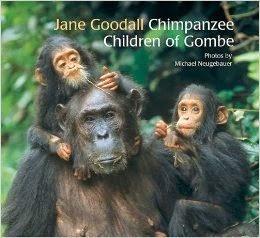 2015-03-18-1426711474-3903606-ChimpanzeeChildrenofGombe.jpg