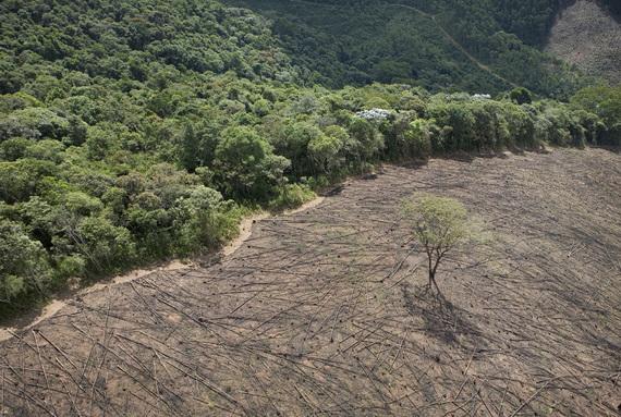 2015-03-19-1426781859-4601007-deforestation.jpg