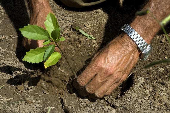2015-03-19-1426781974-7743372-treeplanting.jpg