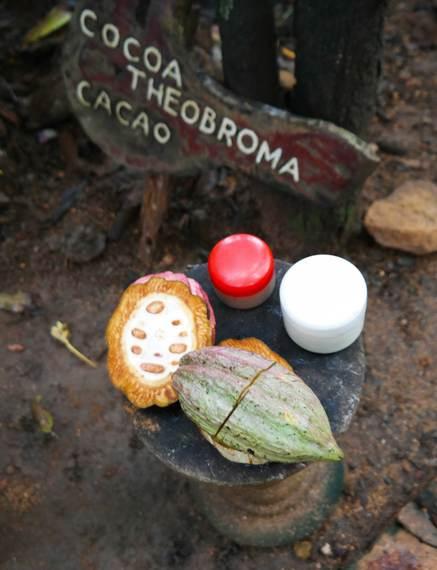 2015-03-19-1426788133-5450796-cocoaplant.jpg