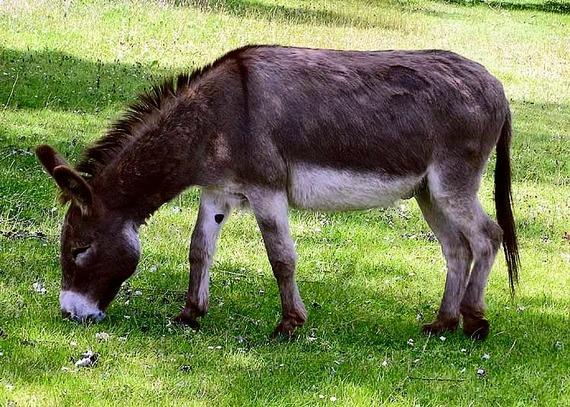 2015-03-20-1426865226-4721676-Donkey_1_arp_750px.jpg