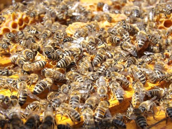 2015-03-23-1427154014-6176812-bees486872_1280.jpg