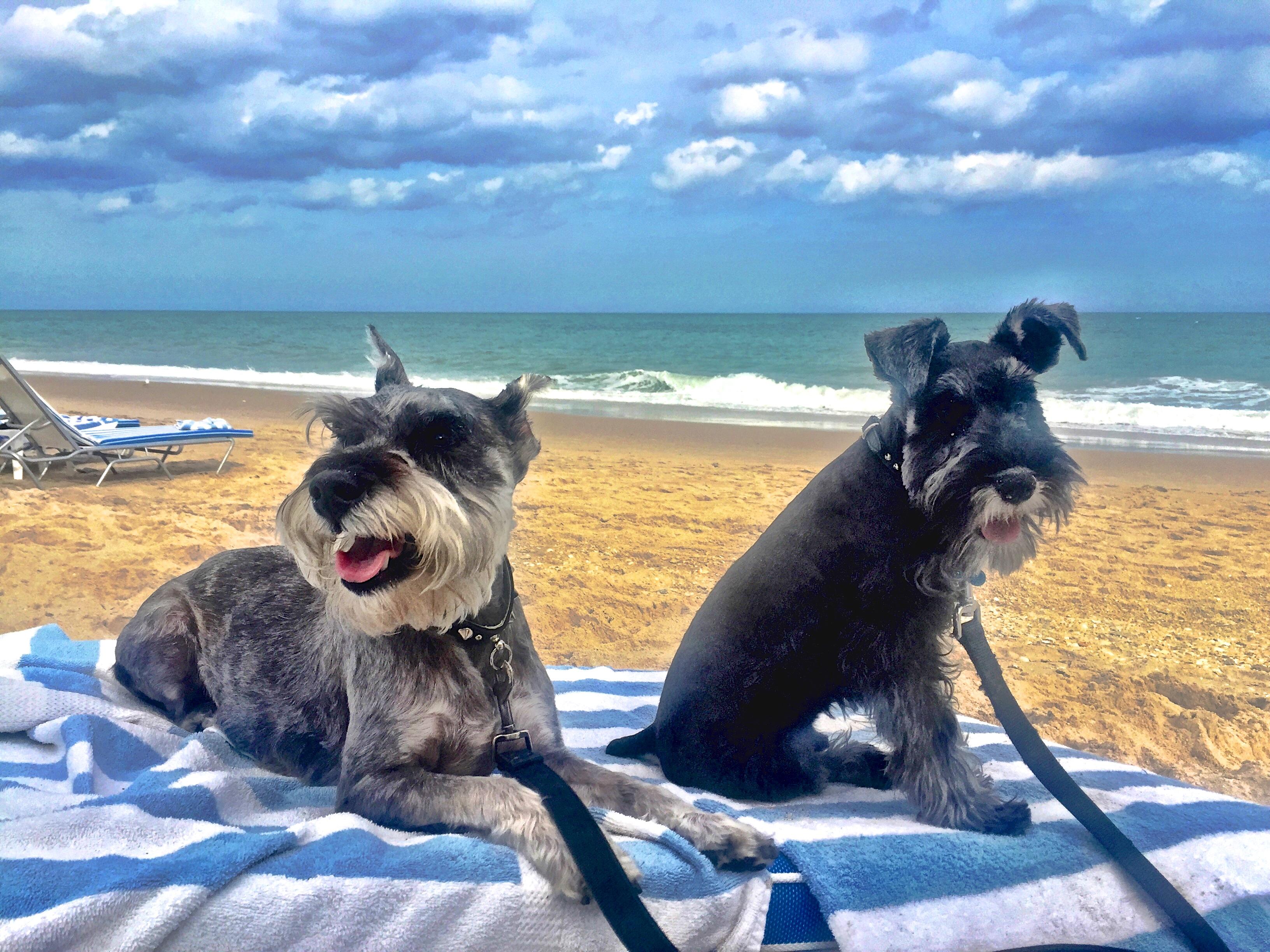 Shell Island Dog Friendly Beach