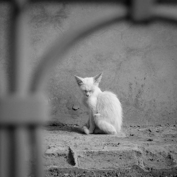 2015-03-25-1427287849-2000993-7.CatMorocco2013.jpg