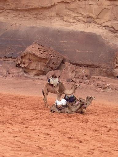 2015-03-25-1427308994-7324392-camel1.jpg
